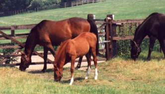 Mare & Foal at Copgrove, Jun 95. Click for a larger image