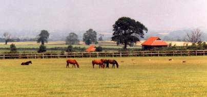 Yearlings at Copgrove. Rearing sheds in background. Click for a larger image