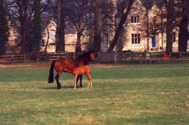 Mare & Foal at Stockwell, March 93. Click for a larger image